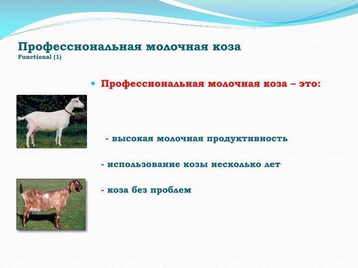 Профессиональная молочная коза