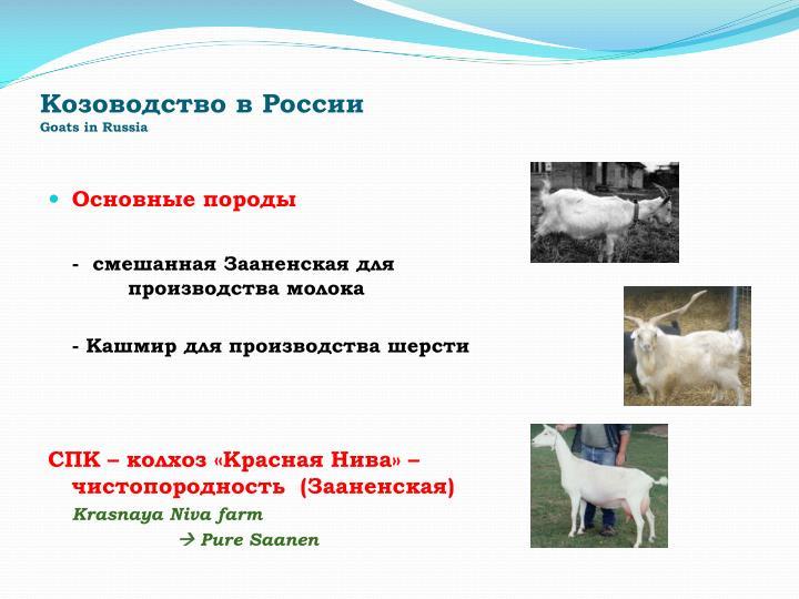 Козоводство в России