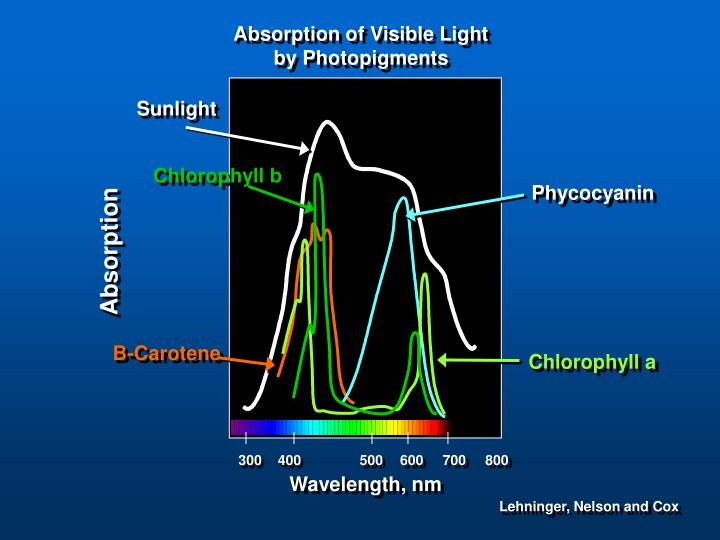 Absorption of Visible Light