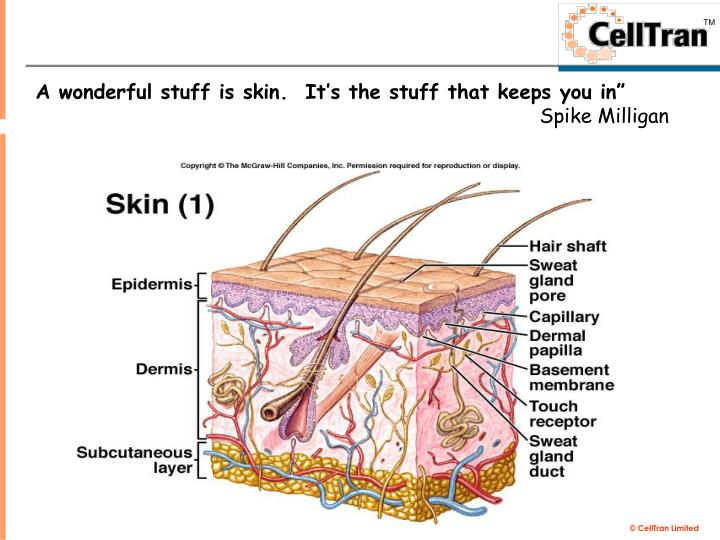 A wonderful stuff is skin.  It's the stuff that keeps you in""