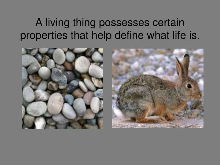 A living thing possesses certain properties that help define what life is
