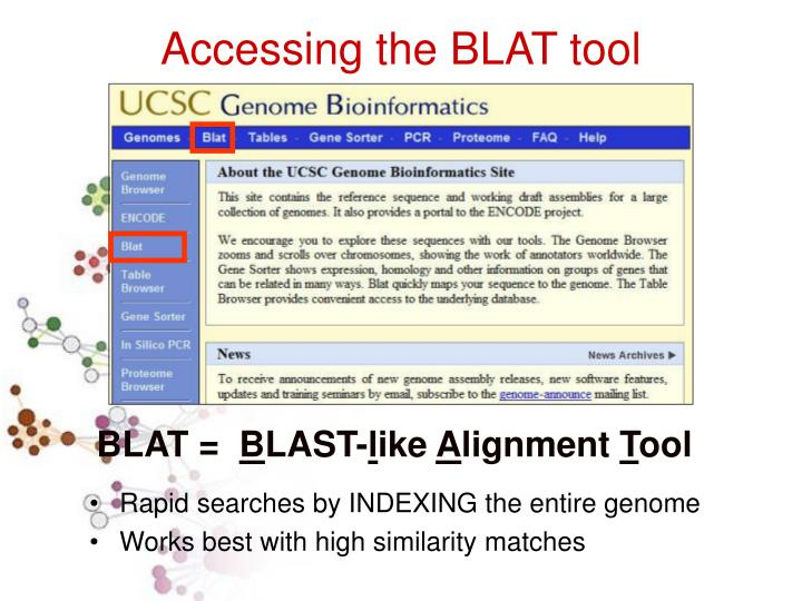 Accessing the BLAT tool