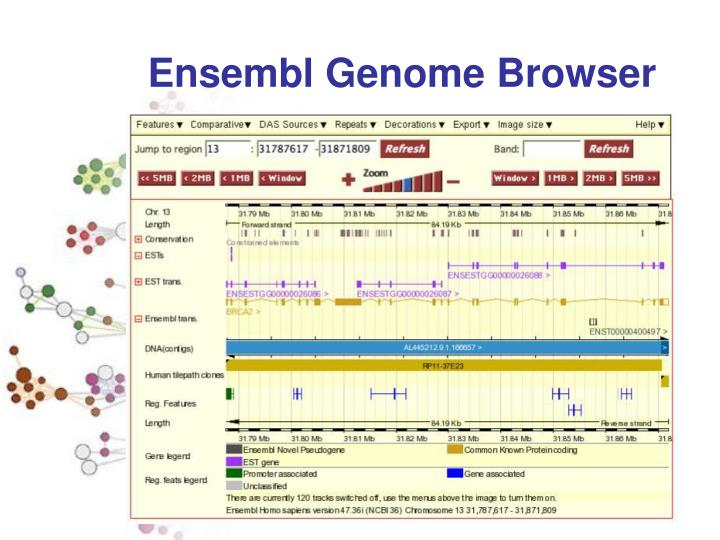 Ensembl Genome Browser
