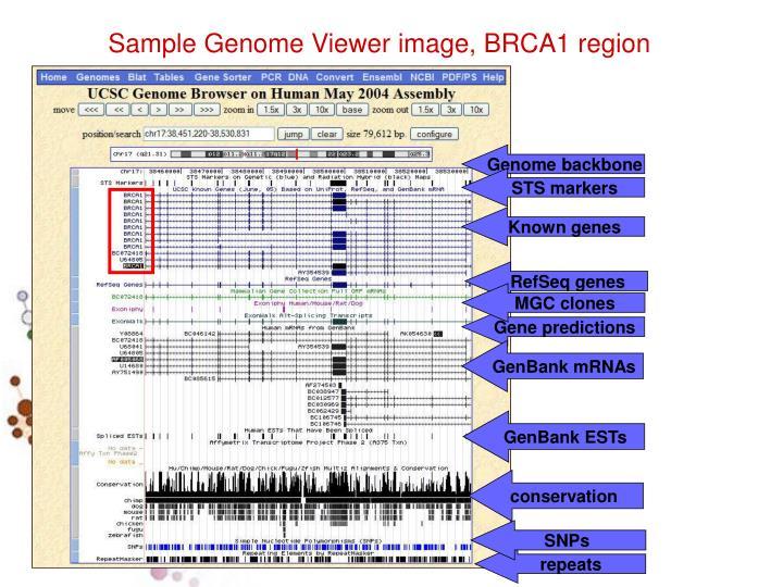 Genome backbone