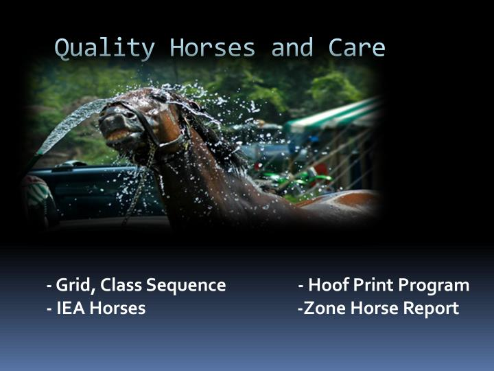 Quality Horses and Care
