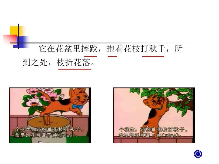 它在花盆里摔跤,抱着花枝打秋千,所到之处,枝折花落。
