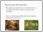 plants and animal die