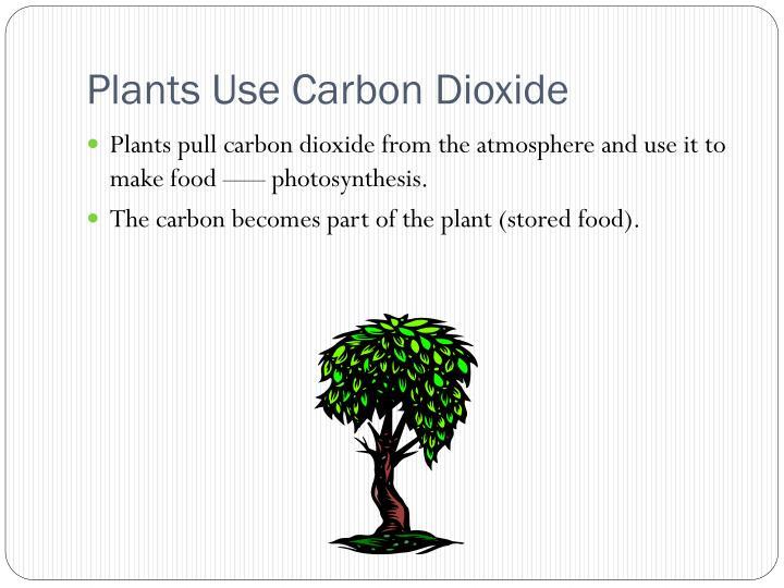 Plants Use Carbon Dioxide