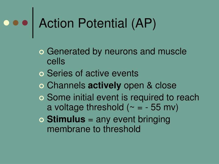 Action Potential (AP)