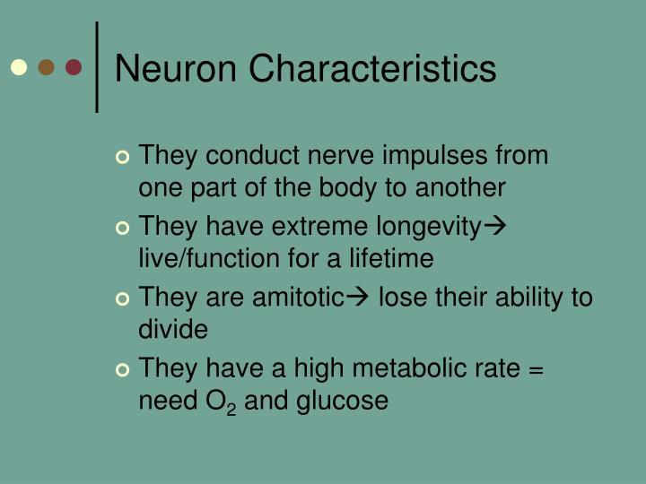 Neuron Characteristics