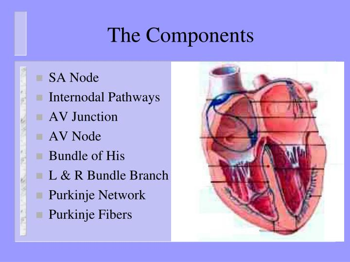 The Components