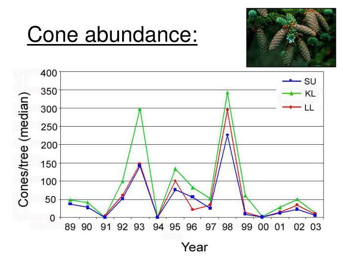 Cone abundance: