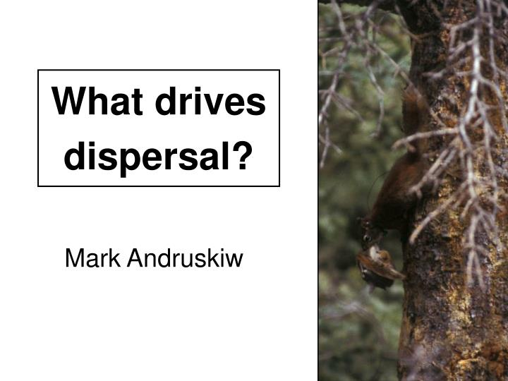 What drives dispersal