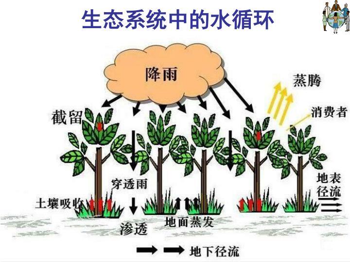 生态系统中的水循环