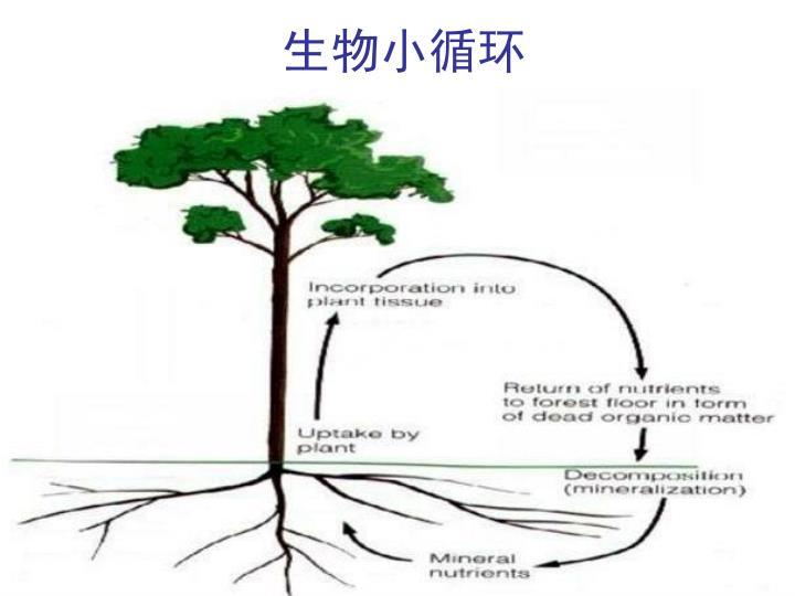 生物小循环