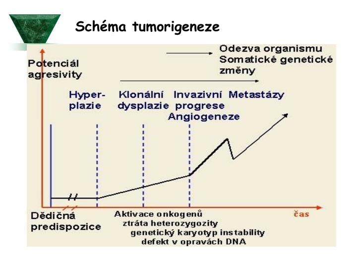 Schéma tumorigeneze