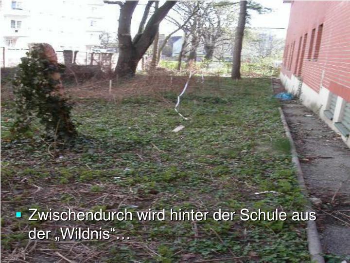 """Zwischendurch wird hinter der Schule aus der """"Wildnis""""…"""