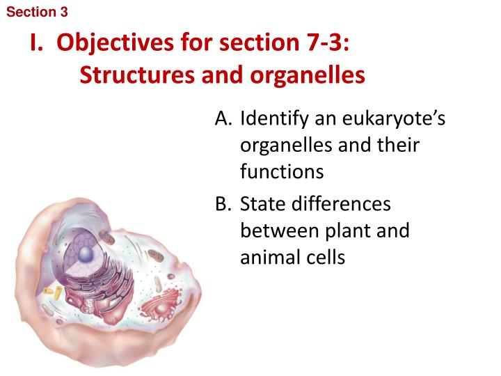 I objectives for section 7 3 structures and organelles