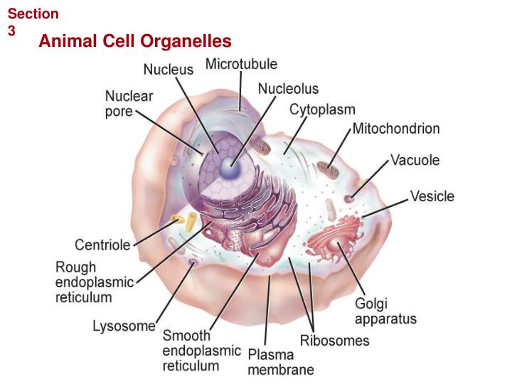 Cellular Structure and Function