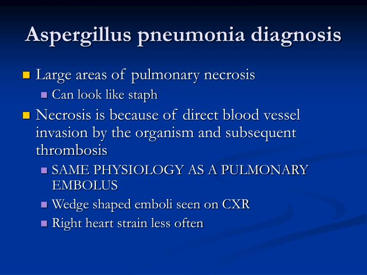 Aspergillus pneumonia diagnosis
