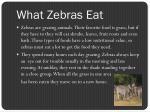 what zebras eat