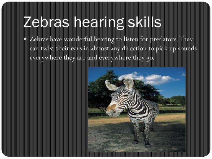 Zebras hearing skills