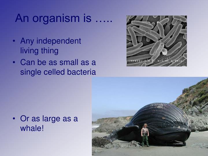 An organism is …..