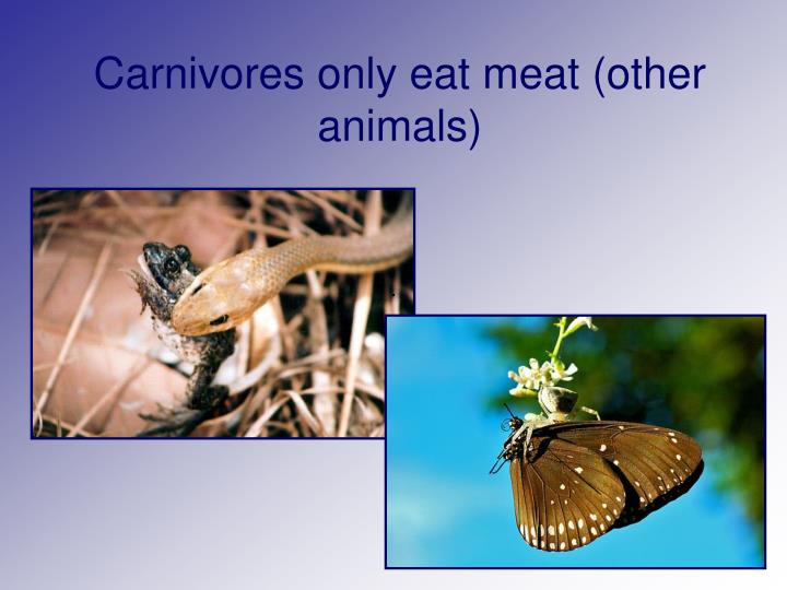 Carnivores only eat meat (other animals)