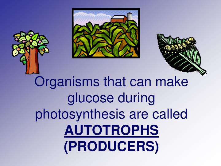 Organisms that can make glucose during photosynthesis are called