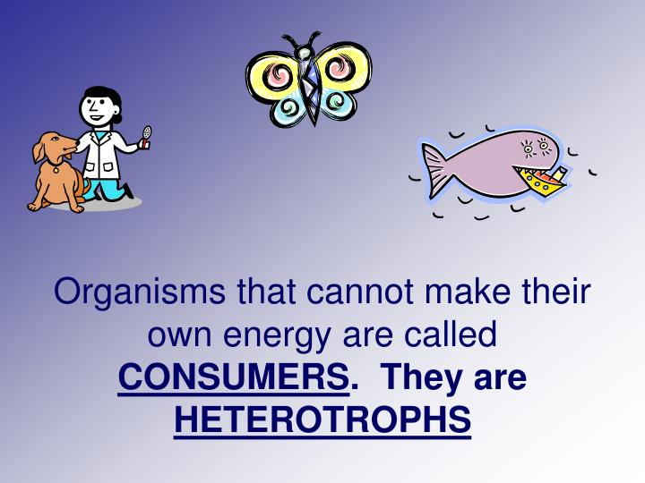 Organisms that cannot make their own energy are called