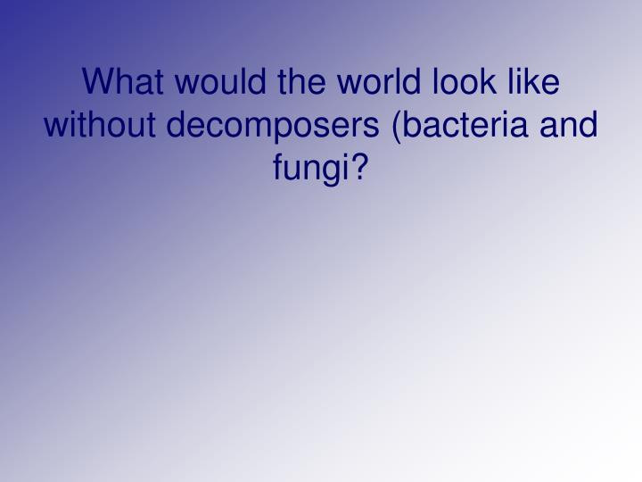 What would the world look like without decomposers (bacteria and fungi?