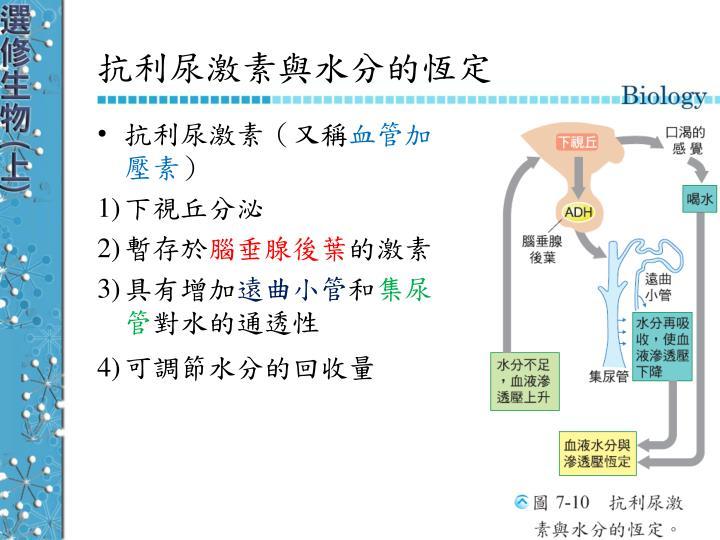 抗利尿激素與水分的恆定