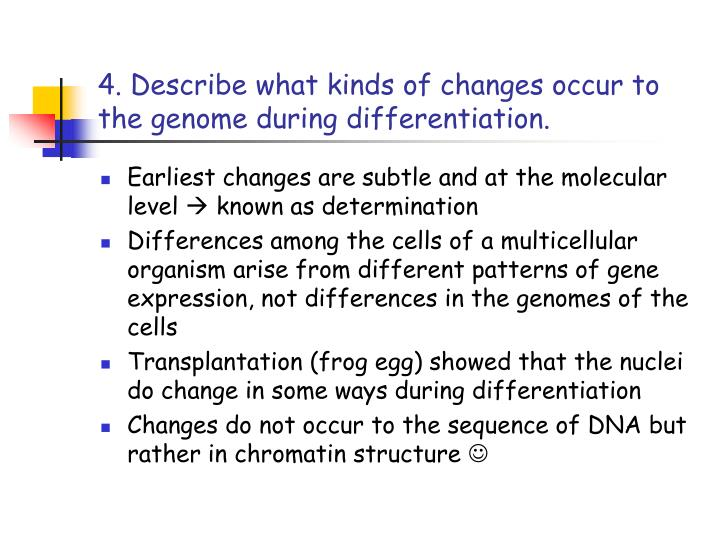 4. Describe what kinds of changes occur to the genome during differentiation.