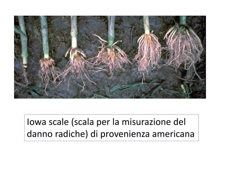Iowa scale (scala per la misurazione del danno radiche) di provenienza americana