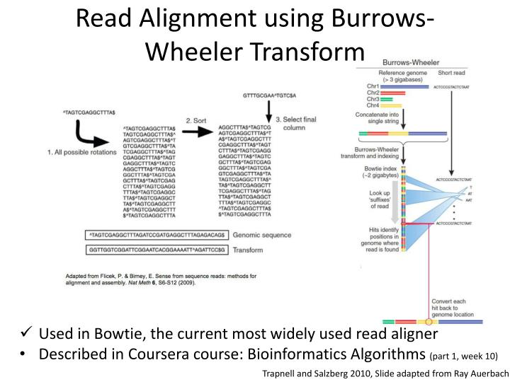 Read Alignment using Burrows-Wheeler Transform