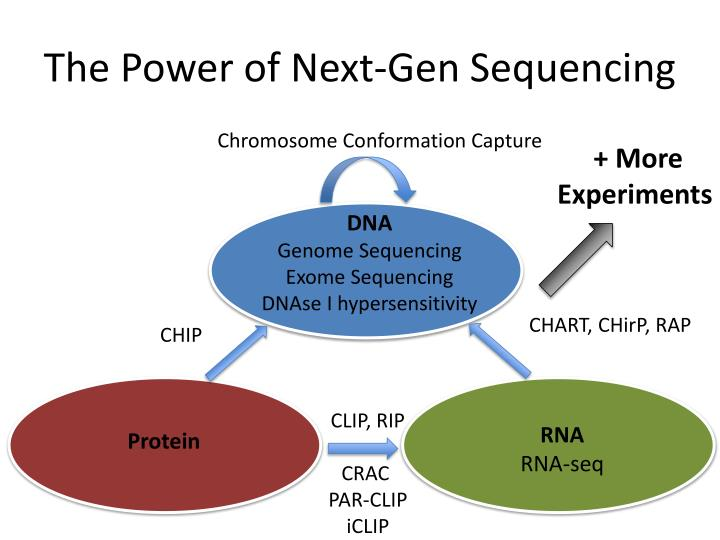 The power of next gen sequencing