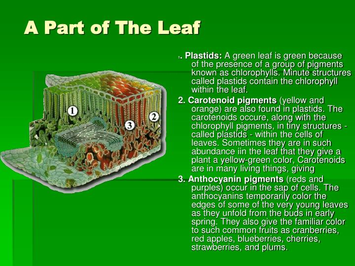 A Part of The Leaf