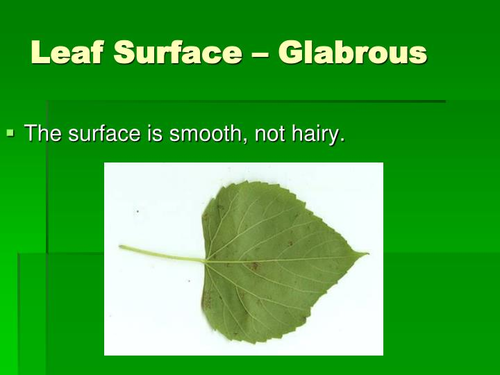 The surface is smooth, not hairy.