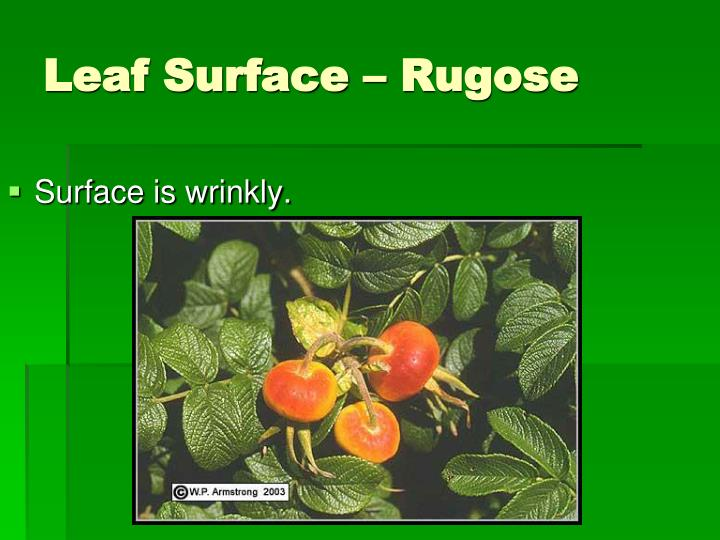 Surface is wrinkly.