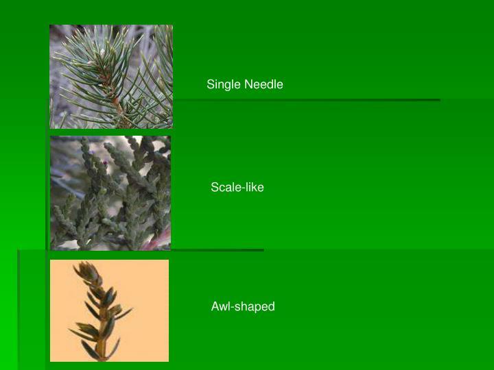 Single Needle
