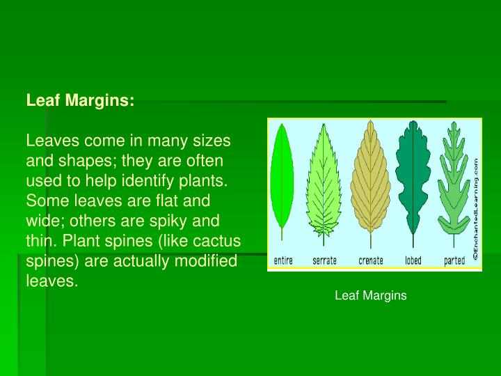 Leaf Margins:
