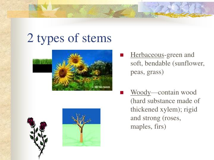 2 types of stems