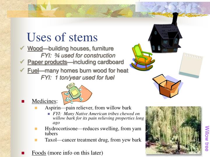 Uses of stems
