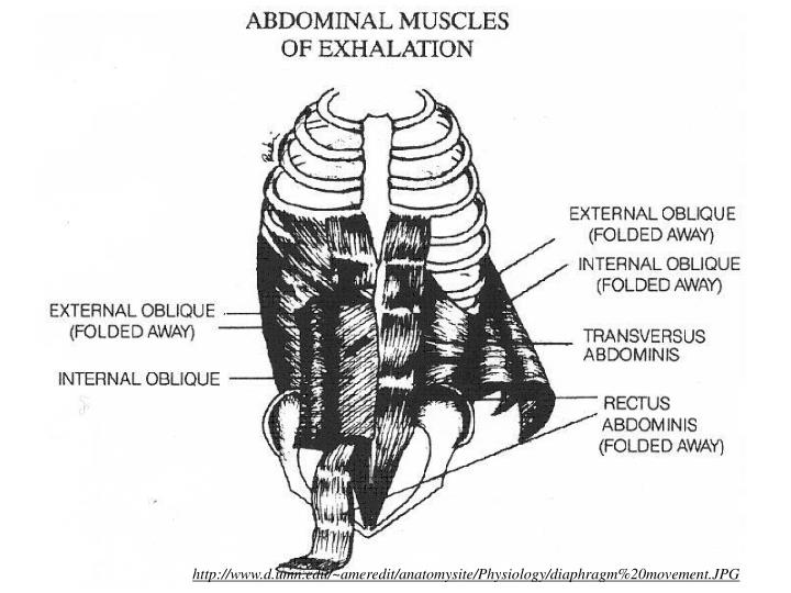 http://www.d.umn.edu/~ameredit/anatomysite/Physiology/diaphragm%20movement.JPG