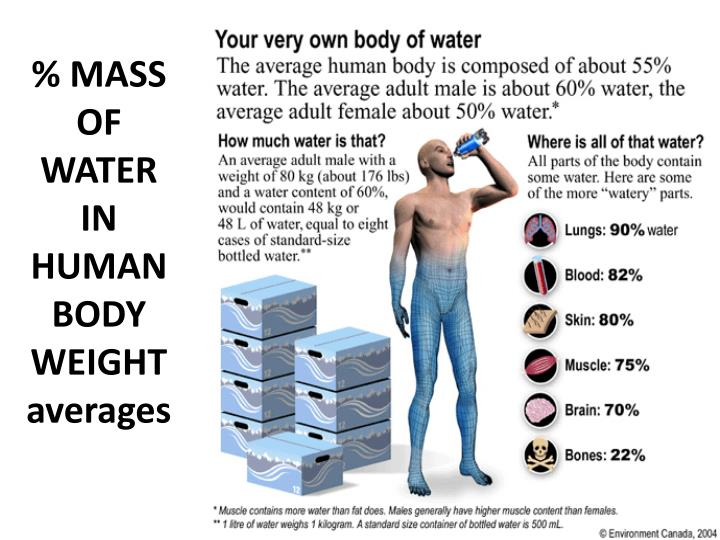 % MASS OF WATER IN HUMANBODY WEIGHT