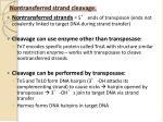 nontransferred strand cleavage