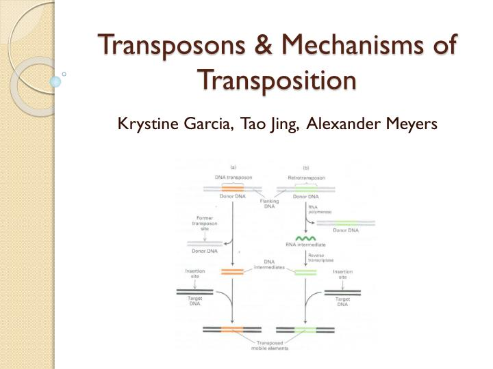 Transposons mechanisms of transposition