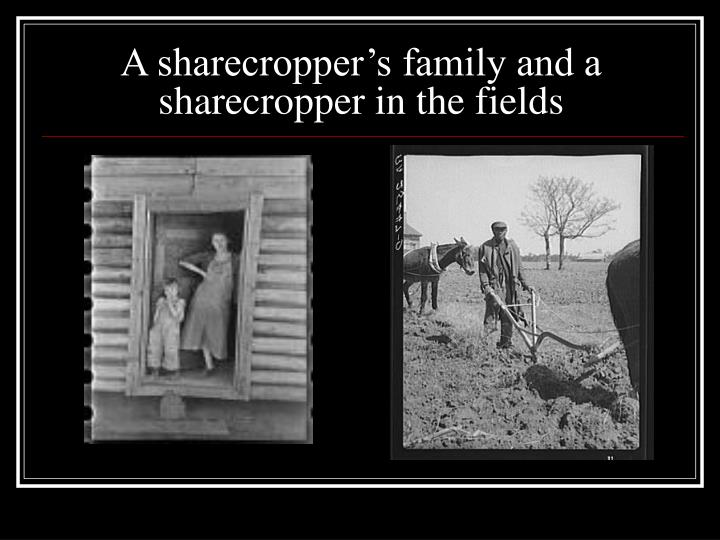 A sharecropper's family and a sharecropper in the fields