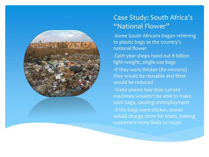 Case study south africa s national flower