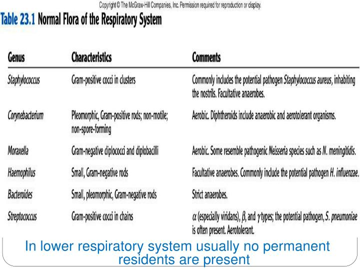 In lower respiratory system usually no permanent residents are present